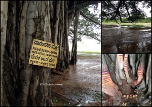 details of my favorite Banyan