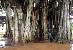 myself sheltered by the Banyan tree