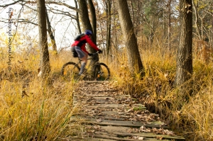 biking in the woods, autumn