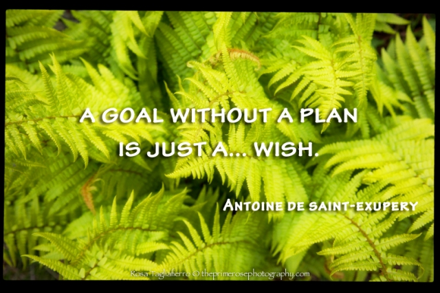 Goal-wish-De-Saint-Exupery-theprimerose-by-Rosa-Tagliafierro