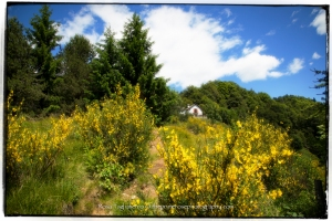 Italian-Alps-theprimerose-photography-by-Rosa-Tagliafierro