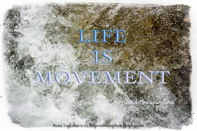 ife-is-movement-photo-rosa-tagliafierro-theprimerose-photography-MONDAY-INSPIRATION