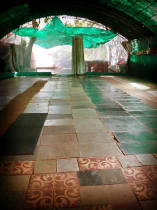 Ashtanga-Yoga-in-Goa-With-Rolf-theprimerose-photography-by-Rosa-Tagliafierro-4947