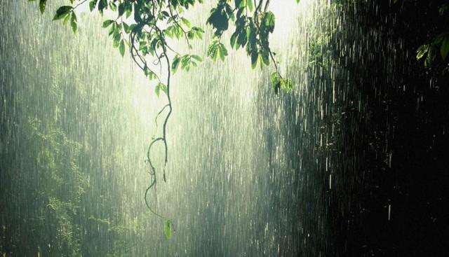 Tropical-Rain