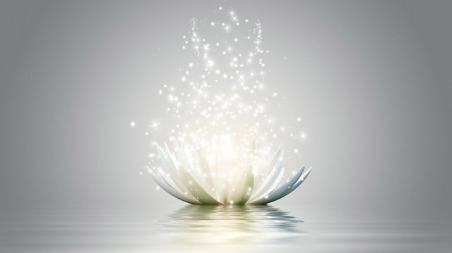lotus-flower-wallpaper.1366